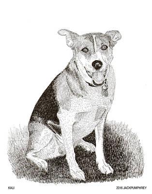 Drawing - Kali Pound Rescue Dog by Jack Pumphrey