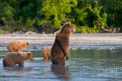 Kamchatka Brown Bear Art Print by Sergey  Krasnoshchekov