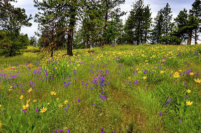 Photograph - Kamiak Meadow by David Patterson