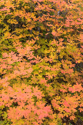 Photograph - Kanarra Fall Colors by Chuck Jason