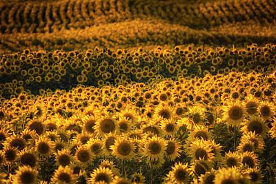 Photograph - Kanas Sunflower Field by Scott Bean