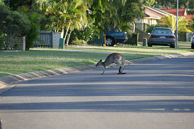 Photograph - Kangaroo 2 by Gary Crockett
