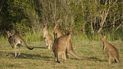 Photograph - Kangaroo 5 by Gary Crockett