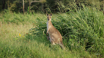 Photograph - Kangaroo 9 by Gary Crockett