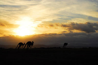 Kangaroos And Sunset Print by Michael Warford