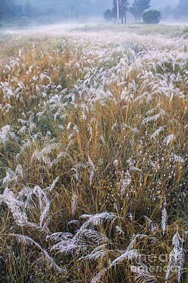 Photograph - Kans Grass In Mist by Hitendra SINKAR