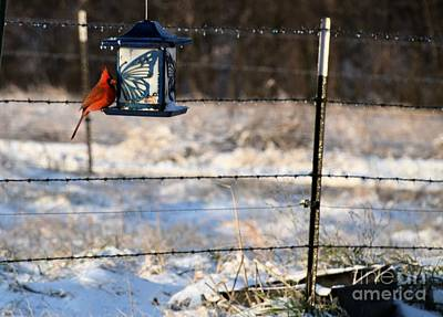 Photograph - Kansas Cardinal At The Feeder by Mark McReynolds