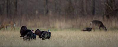 Photograph - Kansas Strut by Ryan Heffron
