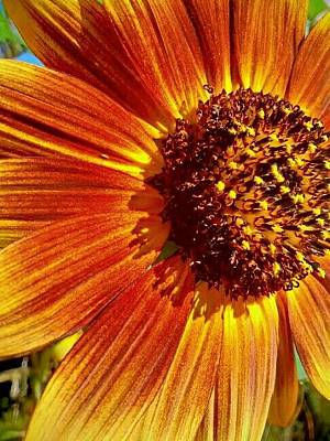 Photograph - Kansas Sunflower by Dustin Soph