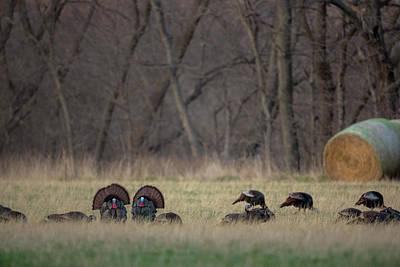 Photograph - Kansas Toms by Ryan Heffron