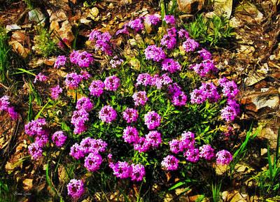 Photograph - Kansas Wildflower Dakota Verbena by Anna Louise
