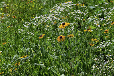 Photograph - Kansas Wildflowers by Alana Thrower