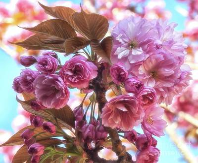 Photograph - Kanzan Cherry Tree by Peggy Hughes