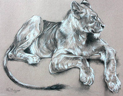Cubs Drawing - Kapama Lion Cub by Derrick Higgins