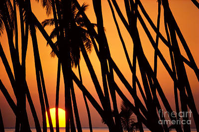 Photograph - Kapuaiwa Coconut Grove by William Waterfall - Printscapes