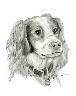 Brittany Spaniel Drawing - Kara by Larry Scarborough