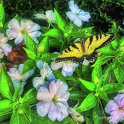 Photograph - Karen's Garden by Toma Caul