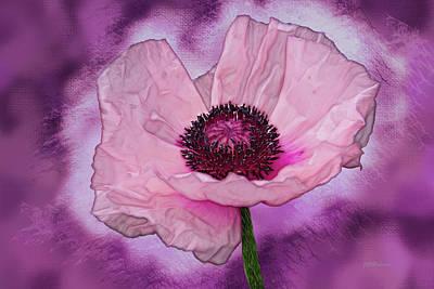 Karinia Poppy Art Print by Joe Halinar