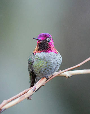 Photograph - Karisa's Hummingbird.1 by E Faithe Lester