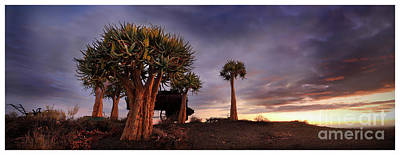 Photograph - Karoo Desert 2 by Michael Edwards