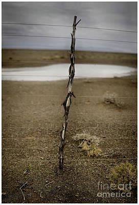 Photograph - Karoo Desert 5 by Michael Edwards