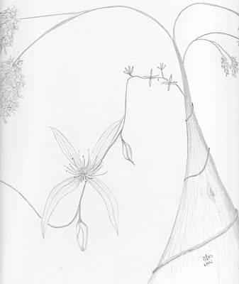 Drawing - Karri And Climbing Clematis by Leonie Higgins Noone