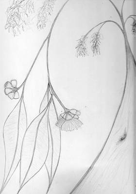 Drawing - Karri Tree In Flower by Leonie Higgins Noone