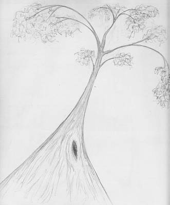 Drawing - Karri Tree by Leonie Higgins Noone
