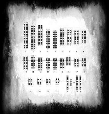 Lab Digital Art - Karyotype - Human Genetic Variation by Daniel Hagerman