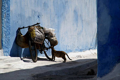 Rabat Photograph - Kasbah Cat by Peter Verdnik