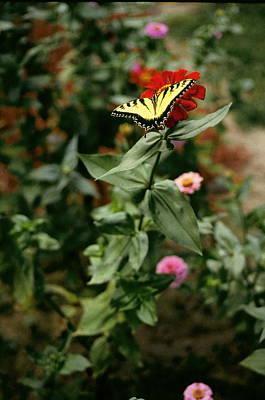 Kathy's Butterfly Art Print by Lynard Stroud