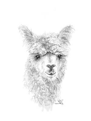 Drawing - Katie by K Llamas
