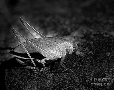 Photograph - Katydid Grasshopper by Smilin Eyes  Treasures