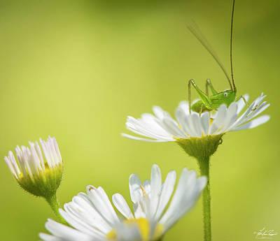 Photograph - Katydid by Philip Rispin