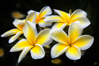 Floral Photograph - Kauai Plumerias Large Canvas Art, Canvas Print, Large Art, Large Wall Decor, Home Decor, Photograph by David Millenheft