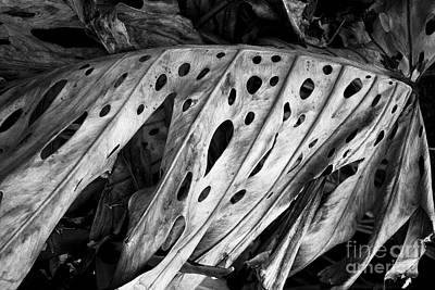 Kauai Old Palm Black And White Art Print by Jon Cretarolo
