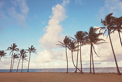 Photograph - Kauai Palm Trees by Melanie Alexandra Price