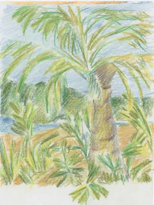 Drawing - Kauai Palms by Barbara Jacobs