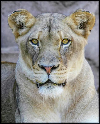 Photograph - Kaya Portrait by Elaine Malott