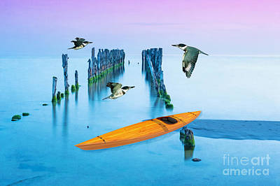 Belted Kingfisher Wall Art - Photograph - Kayak And Kingfishers by Laura D Young