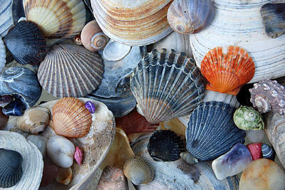 Photograph - Kayla's Shells by John Schneider