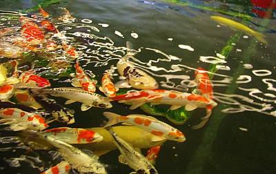 Photograph - Kcsd Koi Buying Trip 17 by Phyllis Spoor
