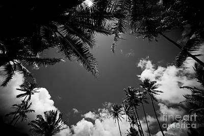 Photograph - Keanae Coconut Palms by Sharon Mau