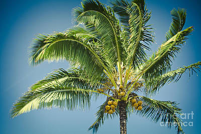 Photograph - Keanae Hawaiian Coconut Palm Maui Hawaii by Sharon Mau