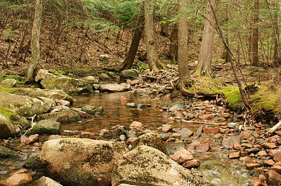 National Park Photograph - Kebo Brook H by Ralph Staples