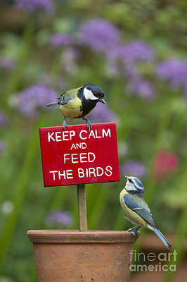 Titmouse Photograph - Keep Calm And Feed The Birds by Tim Gainey