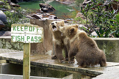 Photograph - Keep Off Fish Pass  by Liane Wright