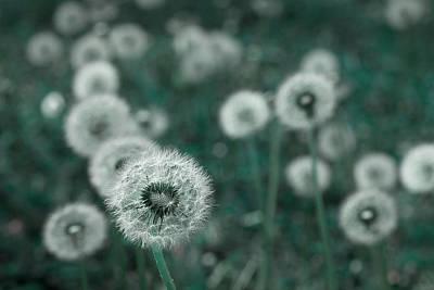 Photograph - Keep Wishing by Mike Eingle