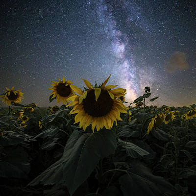 Photograph - Keep Your Head Up by Aaron J Groen