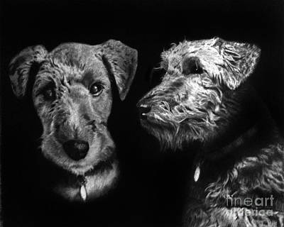 Drawing - Keeper The Welsh Terrier by Peter Piatt
